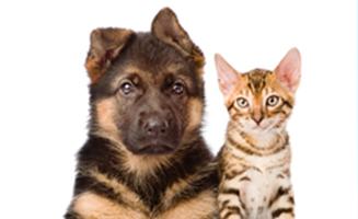 犬と猫の専門病院